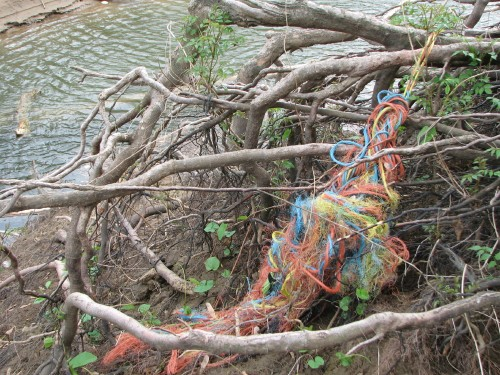 roots and frayed barge rope, 5/09