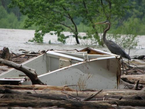 heron and fridge, 5/09