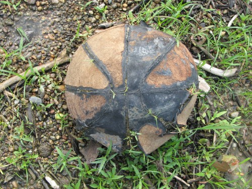 decomposing basketball, 6/09