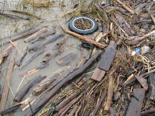 Tire and driftwood