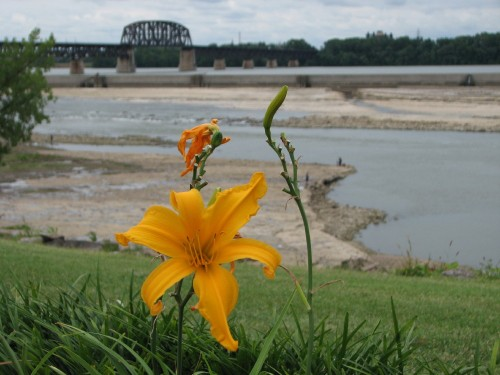 Day lilies and fossil beds, 7/09