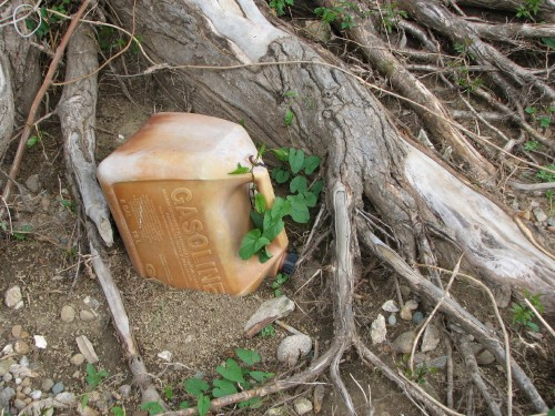 gas can partially buried near tree root