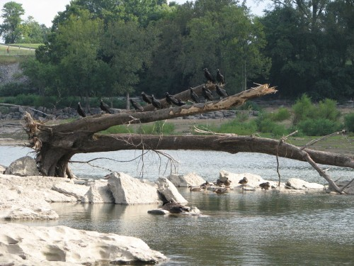 Vulture tree, 8/09