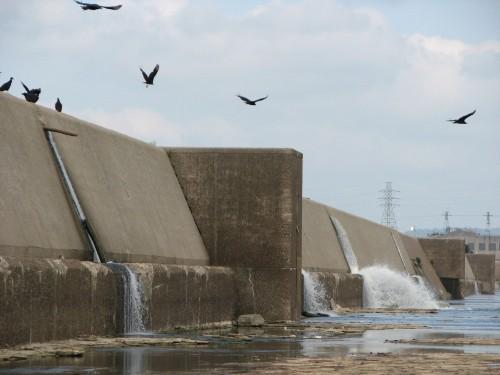 Fixed Wier Dam, 8/09