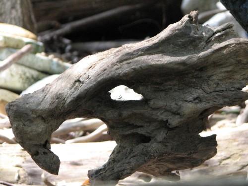Adam's Dragon head, 9/09