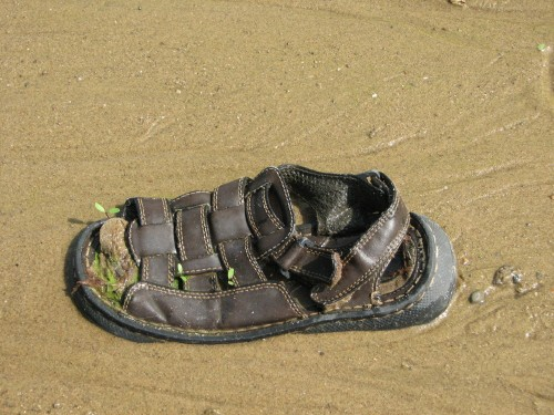 sandal in the sand
