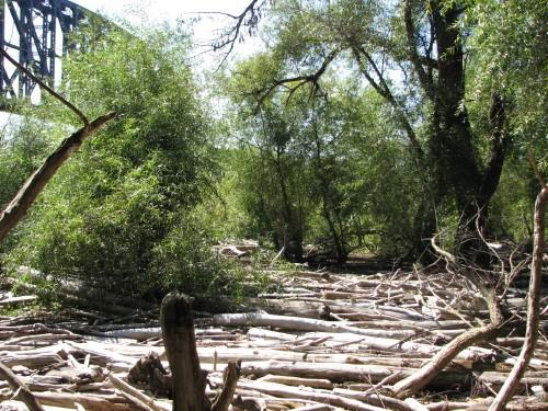 Willow habitat at the Falls, 10/09