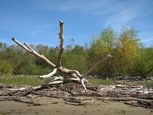 Downed tree at the Falls, 10/09