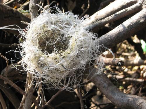 Plastic fiber nest, 11/09