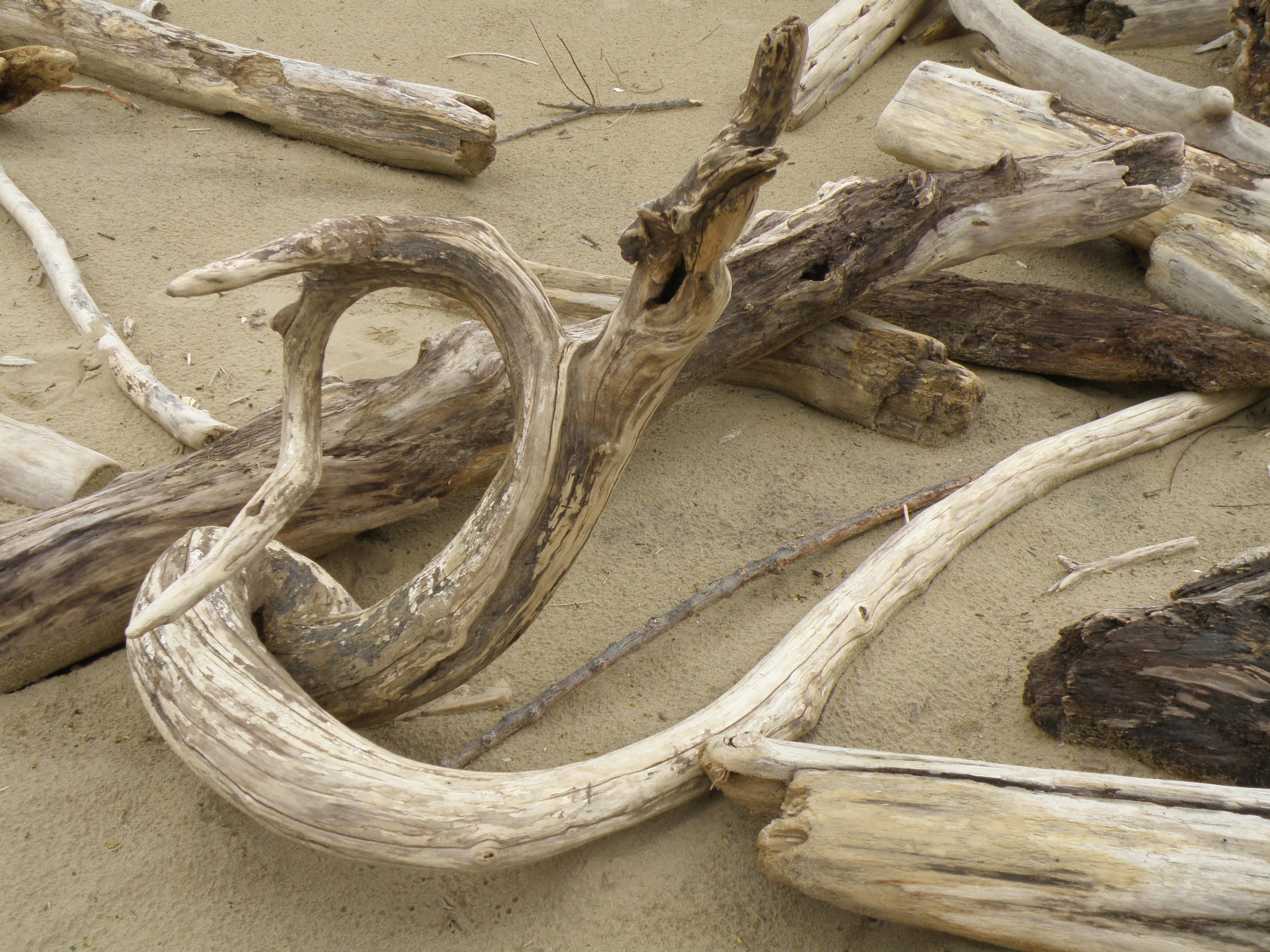 Digital driftwood part iii roots and all artist at for How to work with driftwood
