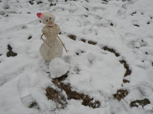 Blanche rolls a snowball, Dec. 2012
