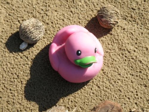 pink rubber duck, Feb. 2013