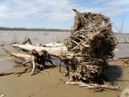 large washed up log, March 2013