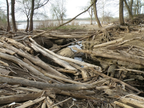 driftwood at the creek, April 2013