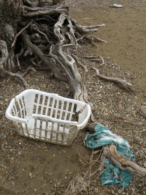 willow roots, plastic laundry basket, and clothing item, April 2013