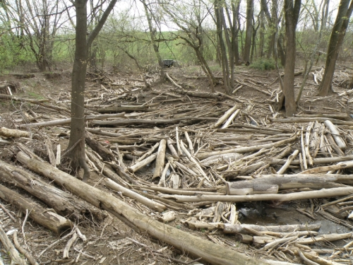 driftwood lining the banks of the creek, April 2013