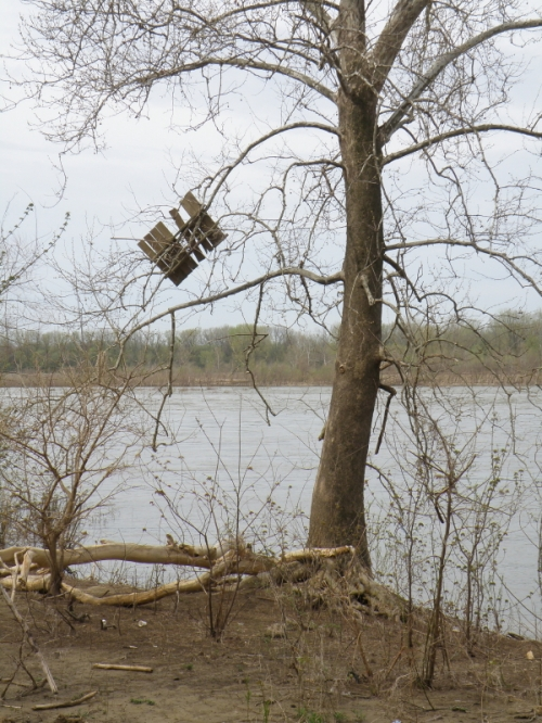 tree with snagged wooden pallet, April 2013