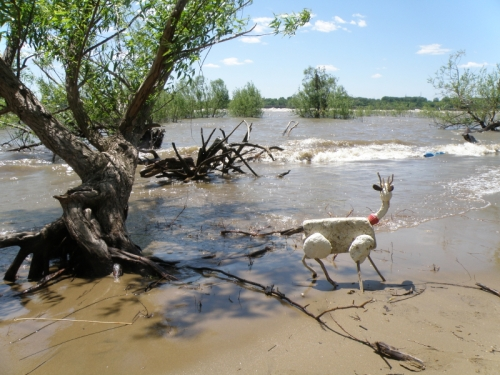 Styrobuck at the river, May 2013