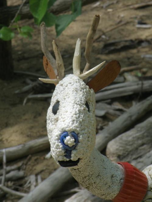 Styrobuck, detail of head facing forward, May 2013