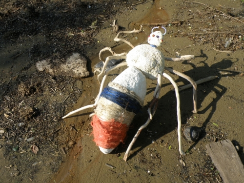 Giant Driftwood Spider, June 2013