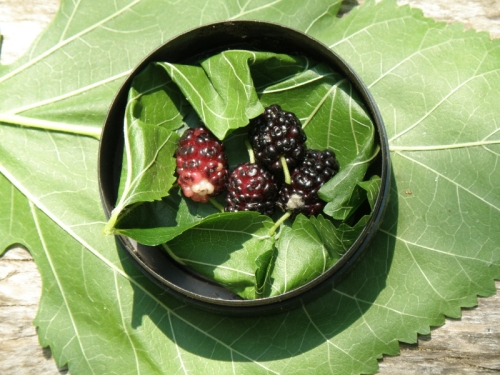 snuff box with mulberries, July 2013