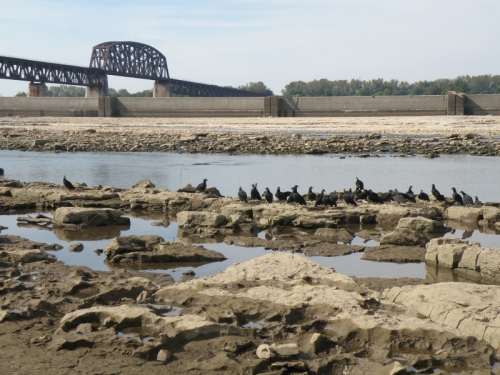 Fossil beds and Black Vultures at the Falls of the Ohio, Sept. 2013