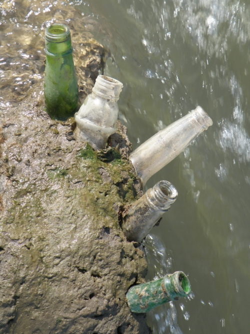 glass bottlenecks stuck in the mud at the water's edge, 2013