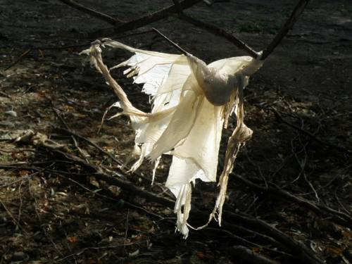 "plastic ""ghost"" on a willow branch, Oct. 2013"