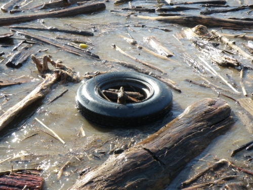 floating automotive tire at the Falls of the Ohio, Jan. 2014