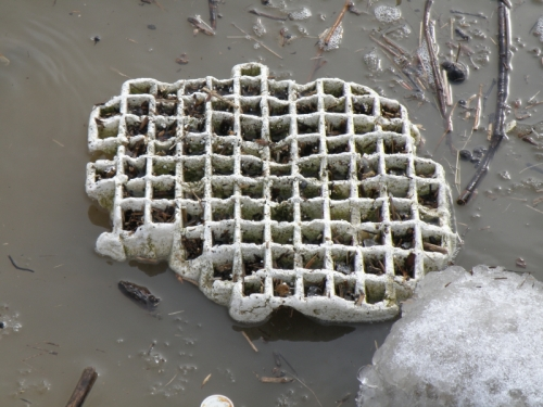 Styrofoam in the river at New Albany, Feb. 2014