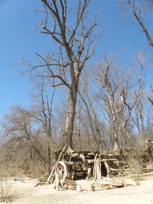 Cottonwood tree at the Falls of the Ohio, March 2014