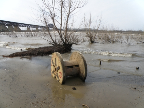 wooden cable spool and willow tree, Falls of the Ohio, March 22, 2014