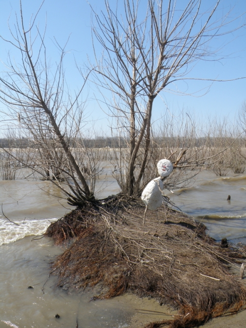 Styro-figure on tiny willow island, Falls of the Ohio, March 2014