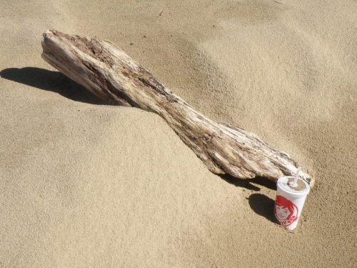 Sand, driftwood, and disposable drink cup, Falls of the Ohio, April 2014