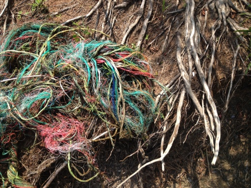 Willow roots and strands of frayed barge cable, Falls of the Ohio, Aug. 2014