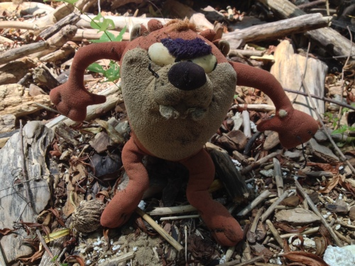 plush Tasmanian Devil toy, Falls of the Ohio, 2014