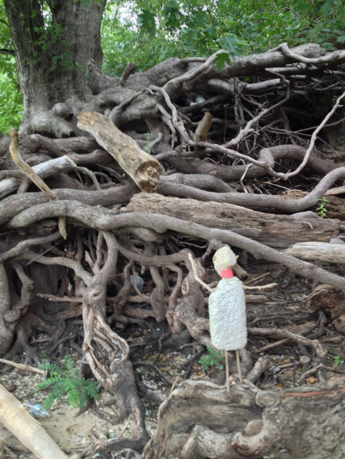 Micro Polo among the roots of a giant tree, Aug. 2014