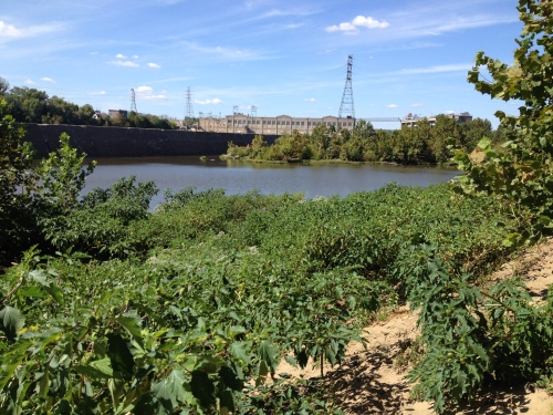Goose Island with distant view of the hydroelectric dam, Falls of the Ohio, Oct. 2014