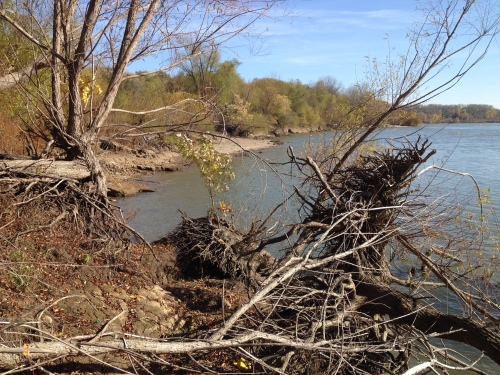 riverbank view by the Falls of the Ohio State Park, Nov. 2014