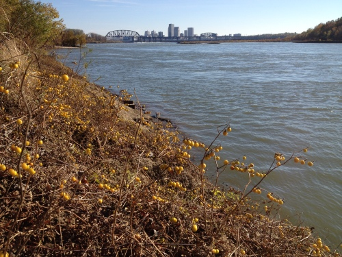 Falls of the Ohio, Louisville in the distance, Nov 2014