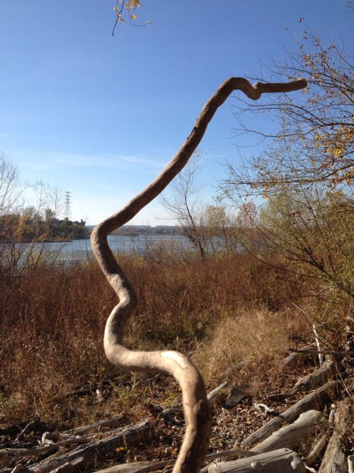 meandering length of driftwood, Nov. 2014