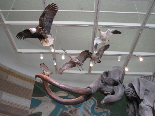 old display at the Falls of the Ohio, birds above the mammoth skeleton