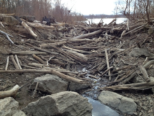 piled up driftwood, Falls of the Ohio, Dec. 2014