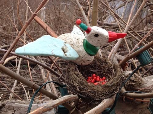 Christmas Bird with display, Falls of the Ohio, Dec. 2014