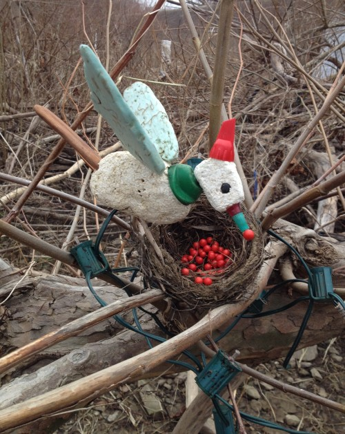 The Christmas Bird with its seanonable display, Falls of the Ohio, Dec. 2014