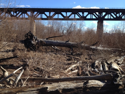 Huge downed log near the railroad bridge, Falls of the Ohio, Jan. 2015