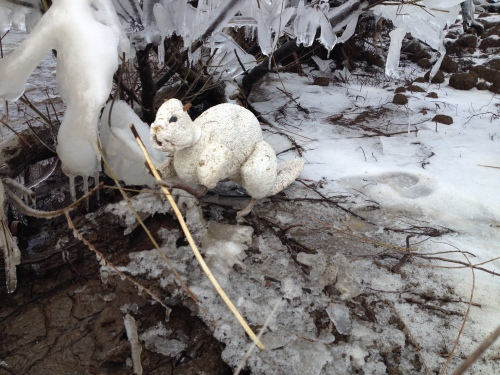 Polar Beaver with willow branch, Feb. 2015