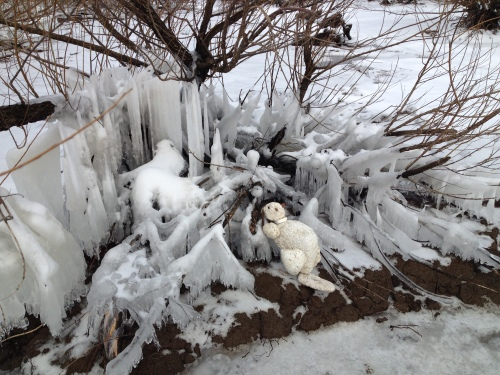 The Polar Beaver, Falls of the Ohio, Feb. 2015