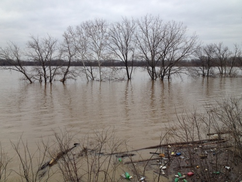 Flooded trees below the Interpretive Center, Falls of the Ohio, March 9, 2015
