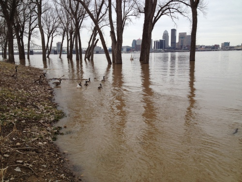 Skyline of Louisville as seen from the flooded Falls of the Ohio, March 9, 2015